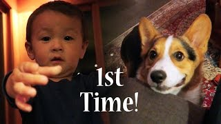 Download CORGI PUPPY MEETS BABY 1st TIME - Life After College: Ep. 454 Video