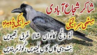 Download Shakir Shuja Abadi   Heart touching Saraiki Dohray voice RJ Asim Video