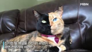 Download 매력적인 유전자?! 양쪽 얼굴이 확 다른 '아수라' 고양이! Video