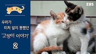 Download 고양이를 부탁해 - 고양이 이야기 #002 Video