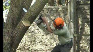 Download Directional Felling Video