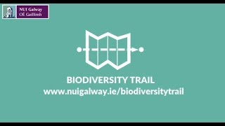 Download Biodiversity Trail at NUI Galway Video