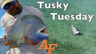 Download Tusky Tuesday Fly fishing with Phantom4 Drone Andy's Fish Video EP.335 Video