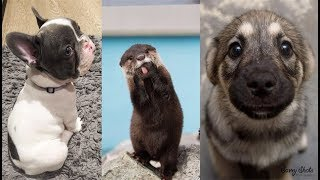 Download Cute baby animals Videos Compilation cute moment of the animals - Soo Cute! #5 Video