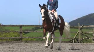 Download FOR SALE 16.2hh Irish Sports Horse Video