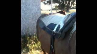 Download Riding a horse bareback verses a saddle - Pros and Cons - Rick Gore Horsemanship Video