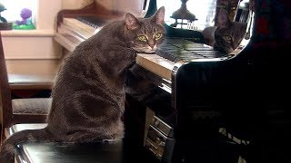 Download Why Do Cats Purr? - Nora - Extraordinary Animals - Series 2 - Earth Video