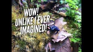 Download Adding Dart Frogs to their new bioactive vivarium! | Jay Wilson Video