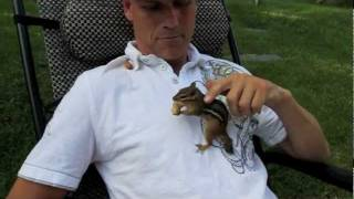 Download My 5 pet chipmunks... Alvin, Simon, Theodore and the Twins fighting over peanuts. Video