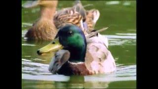 Download Baby Dolittle: Neighborhood Animals, Part 5 | Animal Videos for Kids | Baby Einstein Video