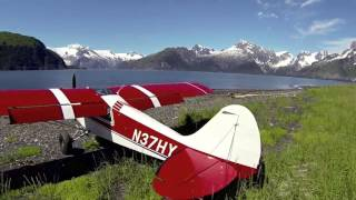 Download Alaska Husky Flying Video