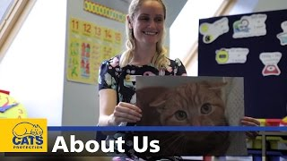 Download Careers with cats - Cats Protection Video