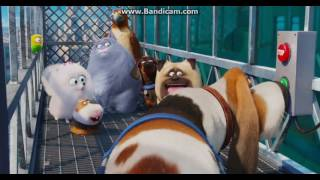 Download The Secret Life of Pets - Going to the Sewers Video
