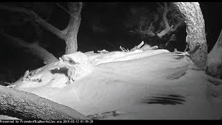 Download Big Bear~Mom shakes of her snow blanket~1:49 AM 2019/03/12 Video