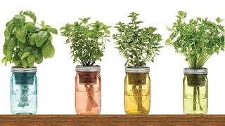 Download 9 Herbs You Can Grow In Water Over And Over Again For Endless Supply Video