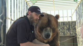Download Celebrity Grizzly Brody The Bear Says Thanks To Nutramax Laboratories Video
