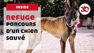 Download Parcours d'un chien sauvé par la Fondation 30 Millions d'Amis Video
