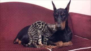 Download Perros peligrosos ? Juzga tu mismo. Video