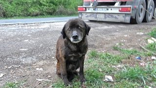 Download Saving This Homeless Dog Just Before A Rainstorm Video