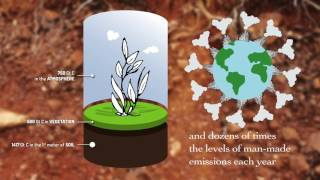 Download Soil Organic Carbon – the treasure beneath our feet Video