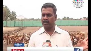 Download Goat farming is seen as side business in Nashik Video