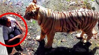Download Most Shocking and Dangerous Wild & Zoo Animal Attacks Caught on Tape Video