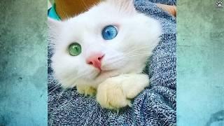 Download 10 Najpiękniejszych kotów świata Video
