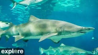 Download Shark Cam powered by EXPLORE.org Video
