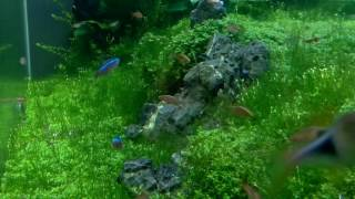 Download Chodroff Aquarium Video