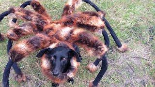 Download Mutant Giant Spider Dog (SA Wardega) Video