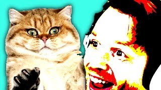 Download Pretty much just laughing at cat videos Video