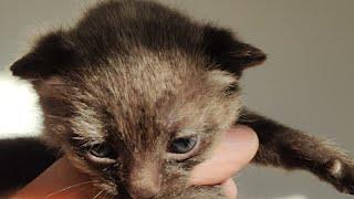 Download Kittens? Video