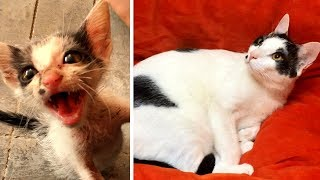 Download Rescuing a terrified abandoned Kitten - The transformation will amaze you! Video
