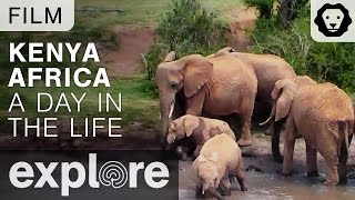 Download Kenya Africa - A Day in the Life of the Explore Live Cams - Film Video