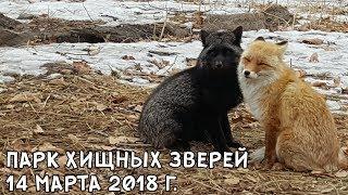 Download ПАРК ХИЩНЫХ ЗВЕРЕЙ 14 МАРТА 2018 Г. Video