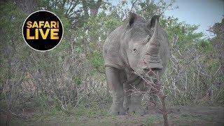 Download 6:54 safariLIVES: Episode 44- Part 2 Video