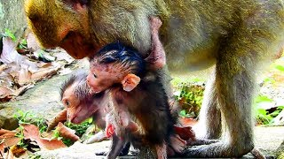 Download Ah ! What mum doing on newborn? Why mum need one more baby like this? Newborn hungry so much #795 Video
