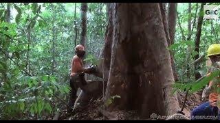 Download Deforestación en el Amazonas / Deforestation in the Amazon Basin [IGEO.TV] Video