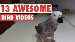 Download 13 Funny Bird Videos Video
