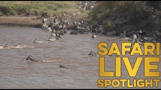 Download WARNING GRAPHIC CONTENT: Your weekly update on the treacherous crossings of the Mara River Video