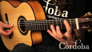 Download Basic Flamenco Techniques Video