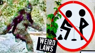 Download 5 WEIRDEST LAWS IN THE WORLD Video