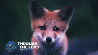 Download Through The Lens   S04E01 - @kpunkka Video
