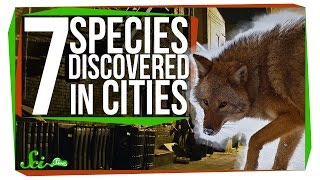 Download 7 New Species Discovered in Cities Video