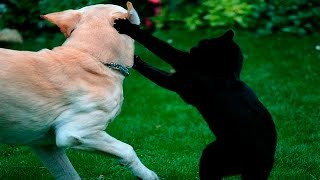 Download Funny Cats And Dogs - Funny Cats vs Dogs - Funny Animals Compilation Video