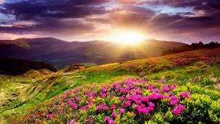 Download Colorful Flowers Field (HD1080p) Video