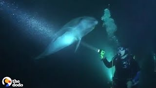 Download Wild Dolphin Knew Exactly How To Ask People For Help | The Dodo Video