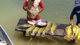 Download Pescaria no Rio Teles Pires 2014 Video