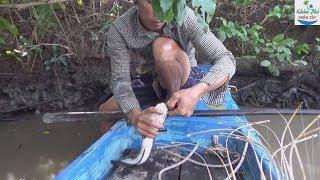 Download 72 | Cắm câu mồi này cá nào mà chịu nổi | fishing Video
