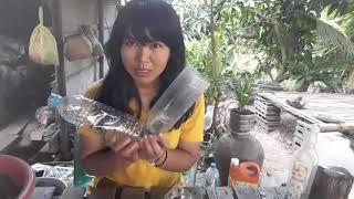 Download ขวดน้ำพลาสติกเหลือๆ อย่าทิ้ง เอามาปลูกพริกท่าใหม่แบบนี้ กันดีกว่าจร้า Video